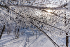 Hoar covered trees in the wintry park, horizontal Stock Photo