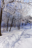 Hoar covered trees in the wintry park, vertical Royalty Free Stock Photo