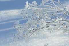 Hoar Frost Royalty Free Stock Photos