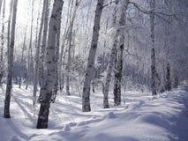 Hoar-frost Fotografie Stock