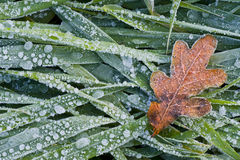Hoar frost Stock Photos