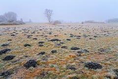 Hoar frost Stock Image