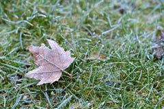 Hoar-Frost lizenzfreies stockbild