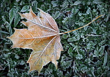 Hoar-frost stock image