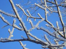 Hoar-frost royalty free stock images