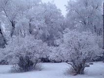 Hoar Frost Lizenzfreies Stockfoto