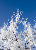Hoar Frost 5. Hoar frost on bare tree branches Royalty Free Stock Images