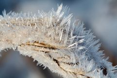 Hoar-frost. On blade royalty free stock photography