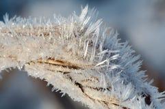Hoar-frost lizenzfreie stockfotografie