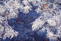 Hoar frost background_3 Stock Photography