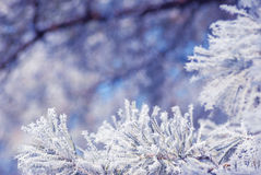 Hoar frost background_2 Royalty Free Stock Photo