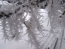 Hoar frost on branch Stock Photos