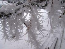 Hoar frost on branch. Hoar frost on tree branch - Regina Stock Photos