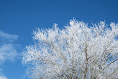 Hoar frost on branches of a tree Stock Photo