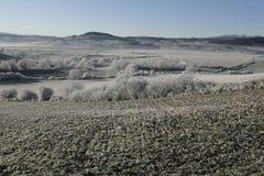 Hoar frost, Stock Image
