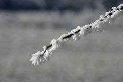 Hoar frost, Royalty Free Stock Images
