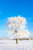 Hoar frost Royalty Free Stock Image