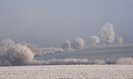 Hoar frost, Cotswolds. Hoar frost on trees, Cotswolds, Gloucestershire, England Stock Photos