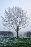 Hoar frost Stock Images