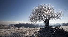 Hoar frost covered landscape Royalty Free Stock Images