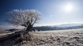 Hoar frost covered landscape Stock Images