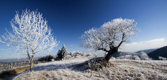 Hoar frost covered landscape Royalty Free Stock Photo