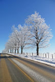 Hoar frost covered trees alongside a rural road Stock Photos
