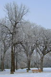 Hoar frost. Covered trees in the park stock images