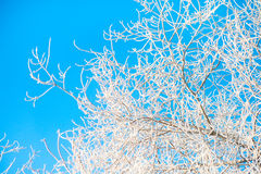 Hoar frost covering bare tree branches Stock Photography