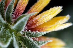 Hoar frost covering flower stock photography