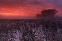 Hoar frost at dawn Royalty Free Stock Image