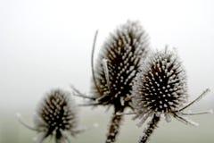 Hoar-frost em cima das plantas Fotografia de Stock Royalty Free