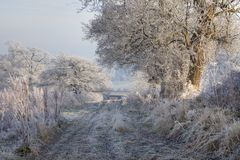 Hoar frost, England Stock Images