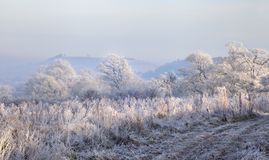 Hoar frost, England Royalty Free Stock Image