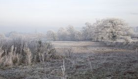 Hoar frost, England Stock Image