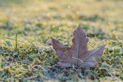 Hoar-frost on a fallen maple leaf Stock Images