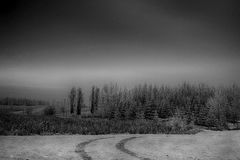 Hoar Frost Royalty Free Stock Images