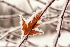Hoar Frost on Leaf royalty free stock images
