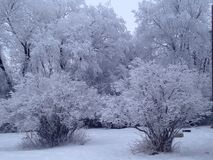 Hoar frost. My daughter back yard Royalty Free Stock Photo
