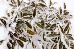 Hoar-Frost oder weicher Raureif auf Anlagen an einem Winter-Tag Stockfotografie