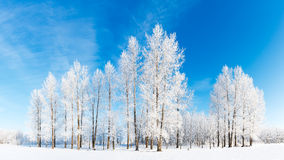 Hoar frost panorama Stock Photos
