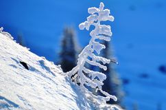 Hoar-Frost-Pfeifer Blackcomb Kanada Lizenzfreie Stockfotografie