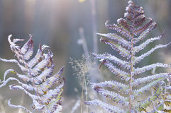 Hoar frost on the plants Stock Images