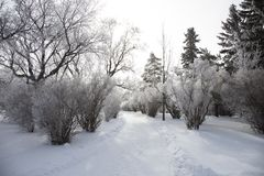 Hoar Frost Prairie Royalty Free Stock Photos