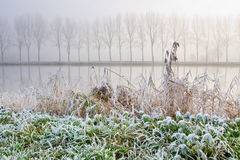 Hoar frost on reed near a canal Stock Image