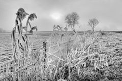 Hoar frost on reed near a fence Royalty Free Stock Image