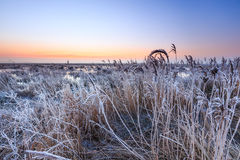 Hoar frost on reed in a winter morning landscape Royalty Free Stock Photography