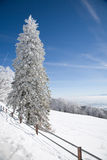 Hoar frost and snow Stock Photos