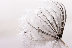 Hoar frost or soft rime on plants at a winter day. Hoar frost or soft rime on plants at a cold winter day Stock Photos