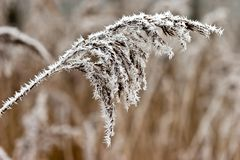 Hoar frost or soft rime on plants at a winter day Stock Photography